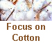 Focus on Cotton