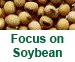 Focus on Soybean