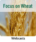 Webcast resource on wheat crop management.