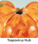 Management information and tools related to tospoviruses.